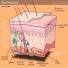 Hỏi đáp y học: Bệnh tăng tiết mồ hôi