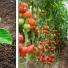 Ứng dụng nước điện phân NaOCLean trong trồng trọt, thực phẩm