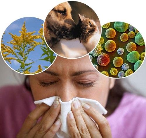 Tác nhân gây dị ứng chủ yếu là phấn hoa, lông động vật và nấm mốc