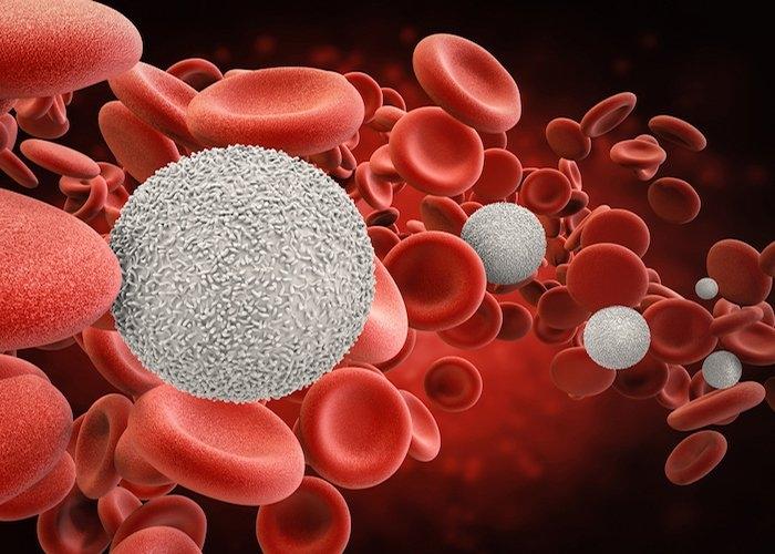Cấy ghép tế bào gốc tạo máu có thể có gây nguy cơ ung thư thứ phát