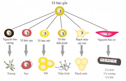 Công nghệ tế bào gốc là một thành tựu y học mới và đáng kinh ngạc nhất trong vòng 1 thế kỷ qua